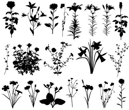 Kwiat. Kolekcja sylwetki różnych gatunków kwiatów Ilustracje wektorowe
