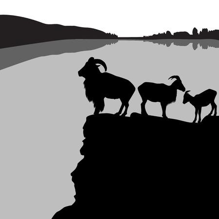Kudde van Barbarije schapen op een rotsachtige heuvel