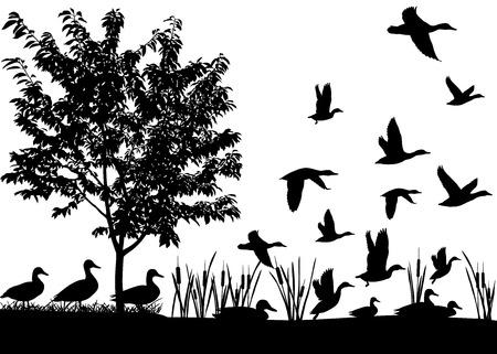 Silhouetten van eenden vliegen en drijvend op het water