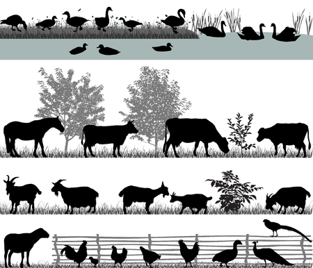 livestock: Collection of silhouettes of domestic animals - farm animals