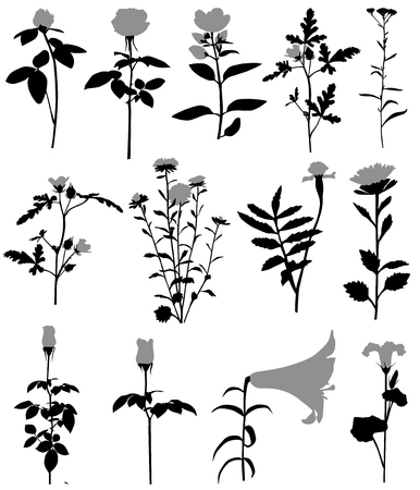 Collection of silhouettes of different species of flowers 向量圖像