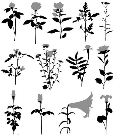 Verzameling van silhouetten van verschillende soorten bloemen Stock Illustratie