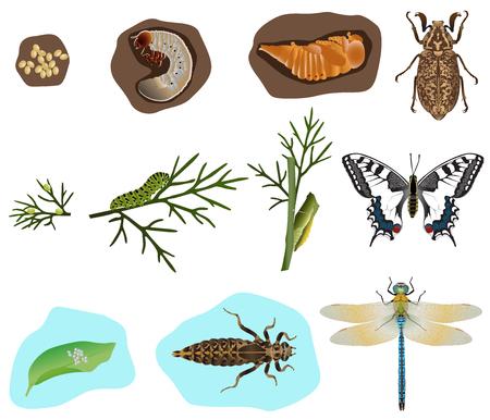 De stadia van de metamorfose van kever, vlinder en dragonfly