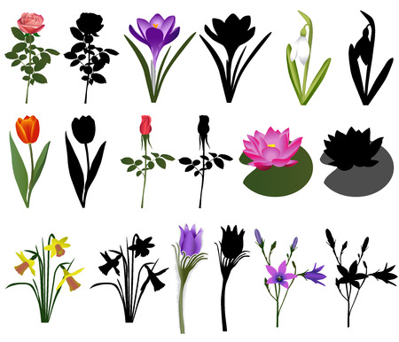 Collection of different species of flowers. Colour vector and silhouette. Иллюстрация