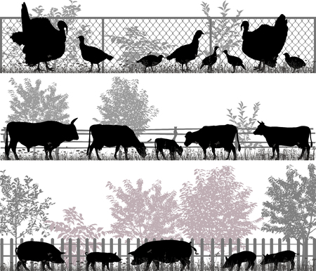poult: Collection of silhouettes of farm animals - turkeys, cows and pigs