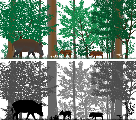 Wild boars on the background of trees. Colour and black-and-white vector.