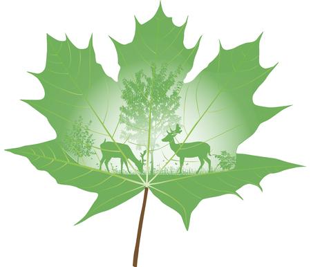 De herten getekend op een esdoornblad