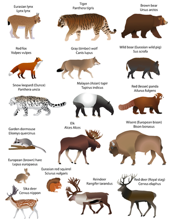 Collection of different species of animals living in the territory of Eurasia Illustration