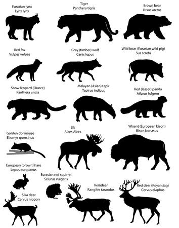 Verzameling van silhouetten van dieren die op het grondgebied van Eurasië wonen