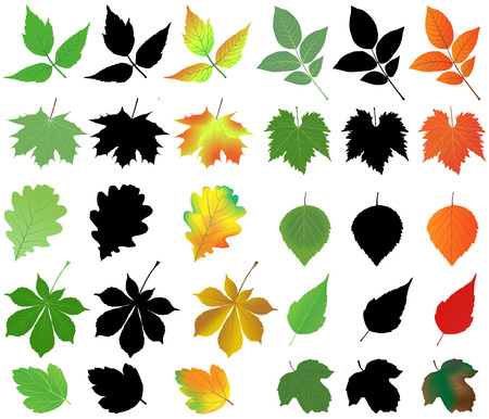 Collection of different species of leaves in silhouettes and color images