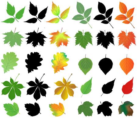 Inzameling van verschillende soorten bladeren in silhouetten en kleurenafbeeldingen