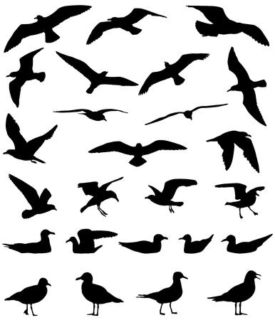 Zeemeeuwen vliegen