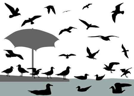 Zeemeeuwen vliegen en drijven op water