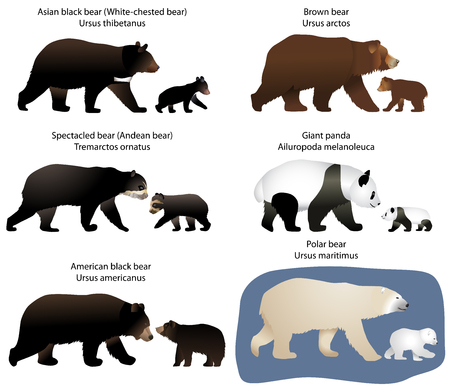 Collection of different species of bears and bear-cubs Stock Illustratie