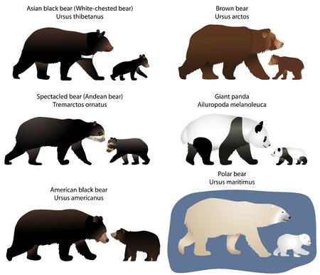 Inzameling van verschillende soorten beren en beren-welpen