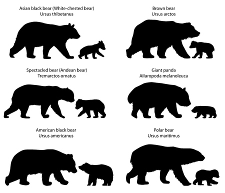 Verzameling van silhouetten van verschillende soorten beren en beren-welpen Stockfoto - 86225958