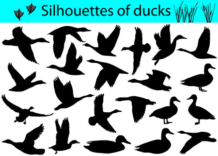 Collection of silhouettes of ducks.
