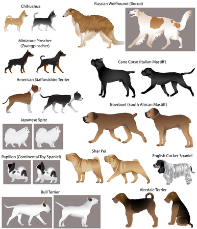 Collection of different breeds of dogs Фото со стока - 91092396