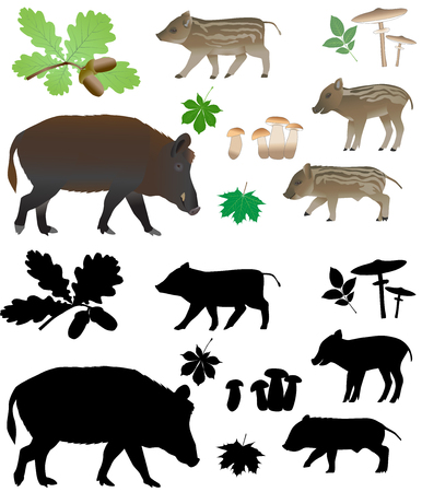 Wild varken met welpen in kleurenafbeeldingen en silhouetten.