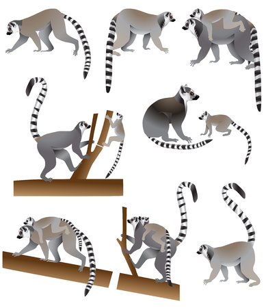 Ring-tailed lemurs and its cubs in color image