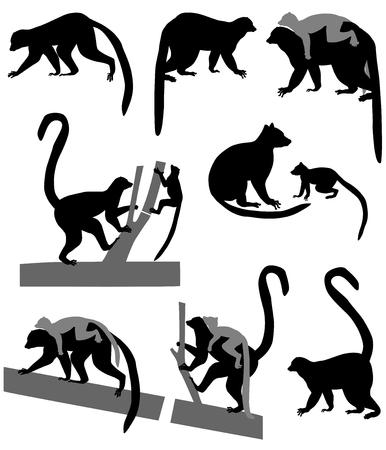 Ringstaartmaki's en zijn welpen in silhouet Stockfoto - 94363344