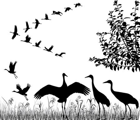 Silhouetten van de vliegende kranen in kudde Stockfoto - 95035350