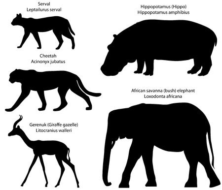 Collection of silhouettes of animals living in the territory of Africa: serval, cheetah, gerenuk, hippopotamus, African savanna elephant.