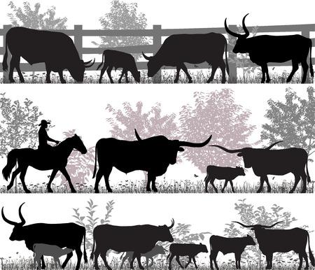 Silhouetten van vee met longhorn Stockfoto - 95860105
