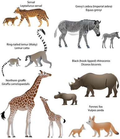 Collection of animals with cubs living in the territory of Africa: northern giraffe, black rhinoceros, Grevys zebra, ring-tailed lemur, fennec fox, serval