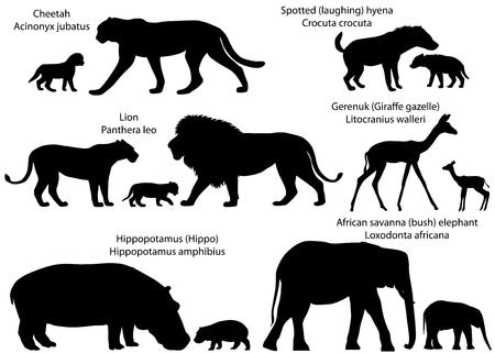 Verzameling dieren met welpen die op het grondgebied van Afrika wonen, in silhouetten: leeuw, cheetah, gerenuk, nijlpaard, Afrikaanse savanneolifant, gevlekte hyena Stockfoto - 97143189