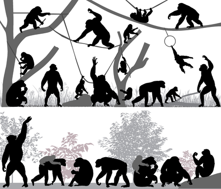 Silhouettes of chimpanzees and its cubs outdoors.