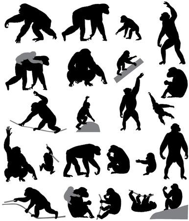 Verzameling van silhouetten van chimpansees en zijn welpen Stockfoto - 98418438