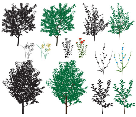 Several species of trees and flowers in color images and silhouettes.