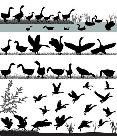 Silhouetten van ganzen die en op water vliegen drijven Stockfoto - 99539243