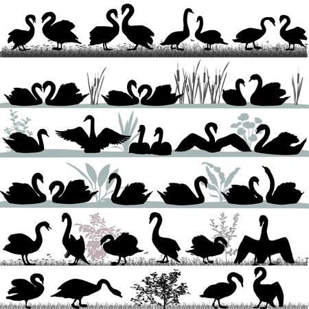 Silhouetten van zwanen buiten en drijvend op het water