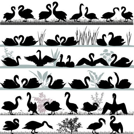 Silhouettes of swans outdoors and floating on water