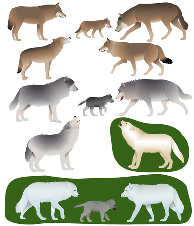 Collection of different species of wolves and wolf-cubs Stock Illustratie