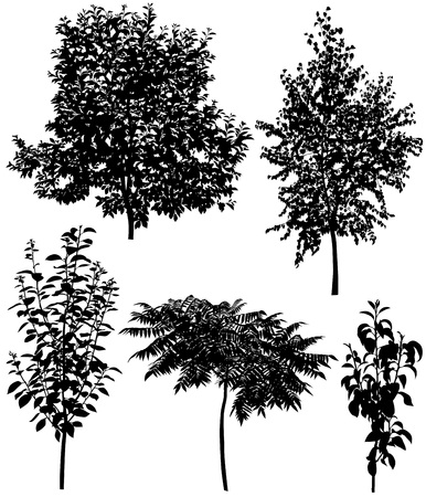 Collection of silhouettes of different species of trees: cherry, pear, plum, birch, sumac Ilustração