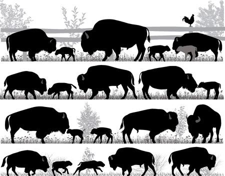 Sagome di bisonte americano, o bufalo, all'aperto