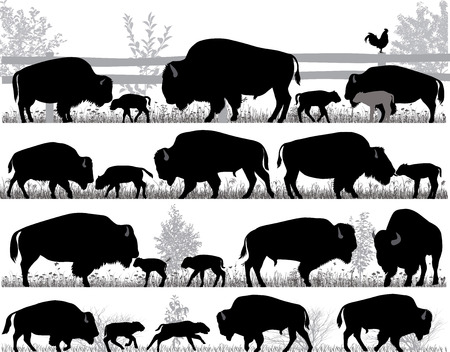 Silhouettes of american bison, or buffalo, outdoors Çizim