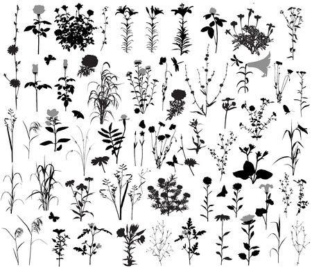 66 silhouettes of flowers and plants. 10 silhouettes of insects. Stockfoto - 103848799