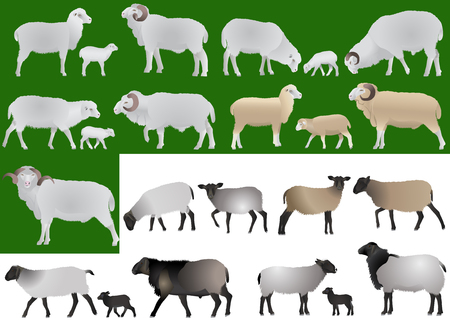 Collection of farm animals - sheeps, rams and lambs