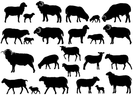 Collection of silhouettes of sheeps, rams and lambs