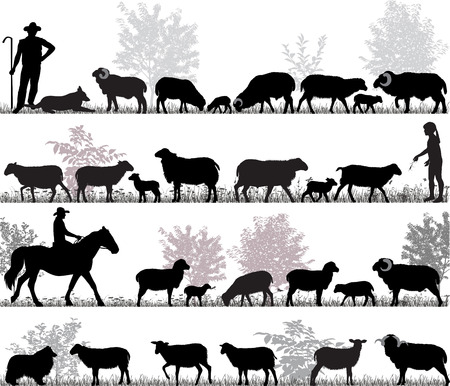Silhouettes of sheeps, rams and lambs outdoors Stockfoto - 114836790