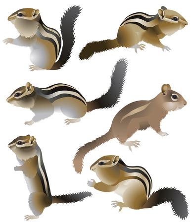 Sammlung von Streifenhörnchen in Farbbild