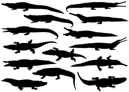 Collection of silhouettes of  different species of crocodiles 向量圖像