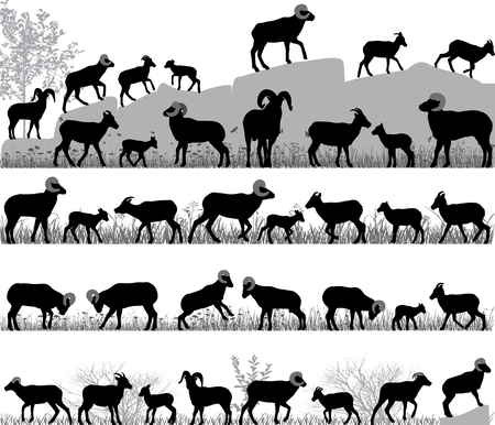 Silhouettes of bighorn sheeps, rams and lambs outdoors