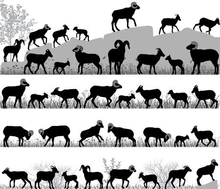 Sylwetki owiec bighorn, baranów i jagniąt na zewnątrz