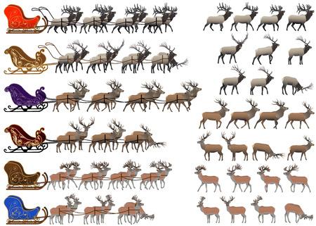 Kolekcja różnych gatunków sań jeleni i jeleni Ilustracje wektorowe