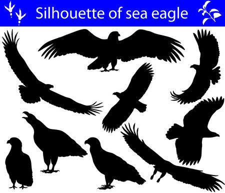 Collection of silhouettes of sea eagles Stock Illustratie
